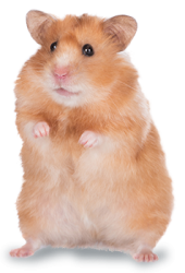 hamster-e1458229386388.png